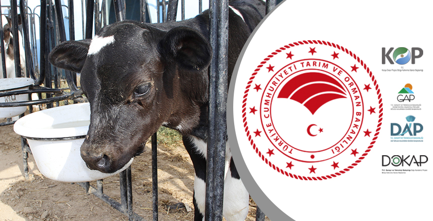 Tarım ve Orman Bakanlığından KOP Kapsamındaki İllere Hayvancılık Desteği