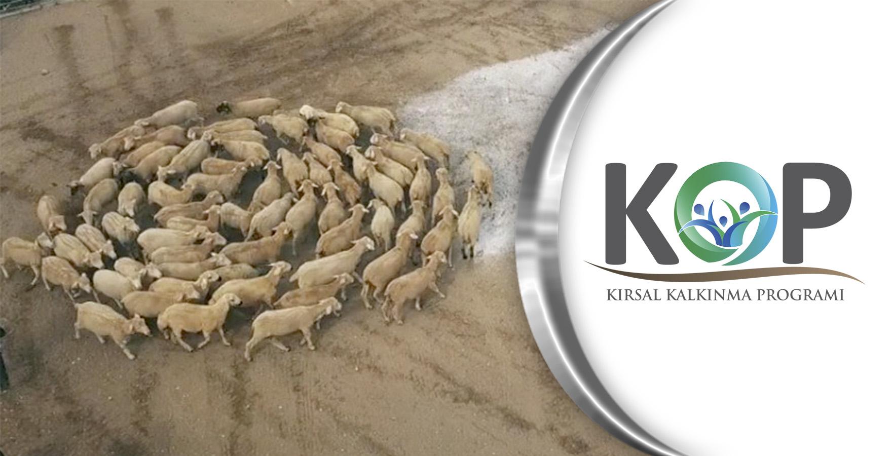 KOP Destekleri Karaman'da Üretim Atağına Dönüştü